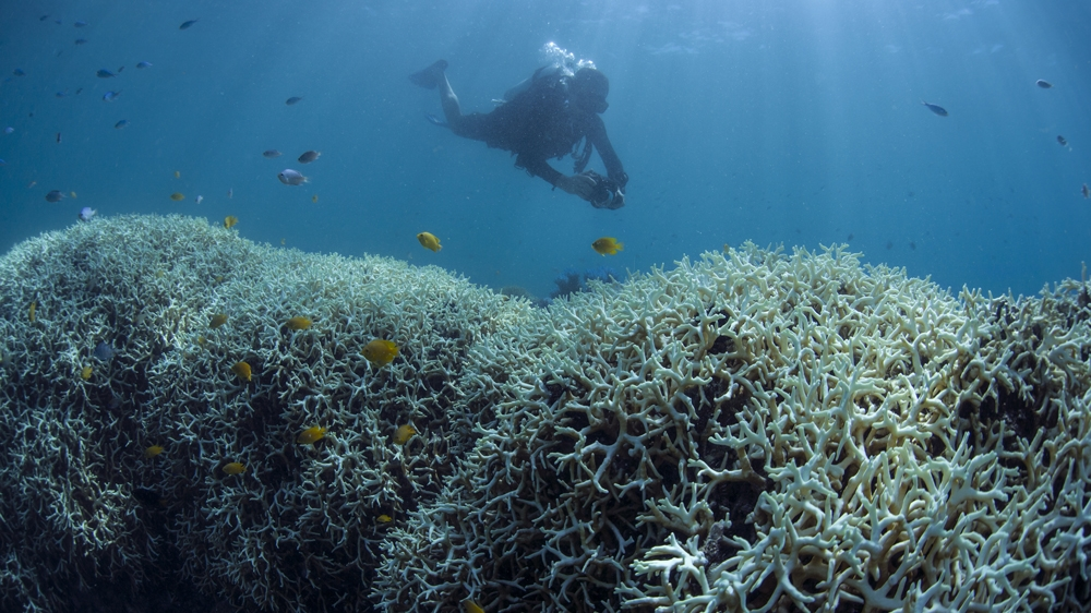 More than $3bn is generated each year from the reef's tourism industry [Courtesy: XL Catlin Seaview Survey]