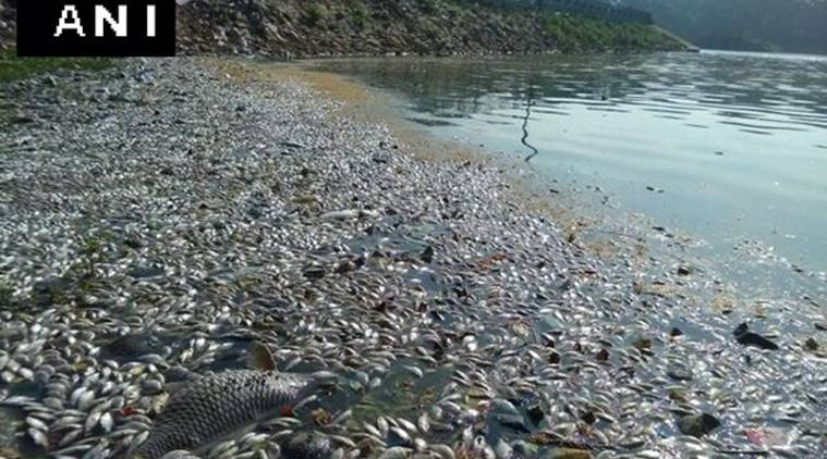 The popular Ulsoor lake in Bengaluru saw thousands of fish being washed ashore on Monday.